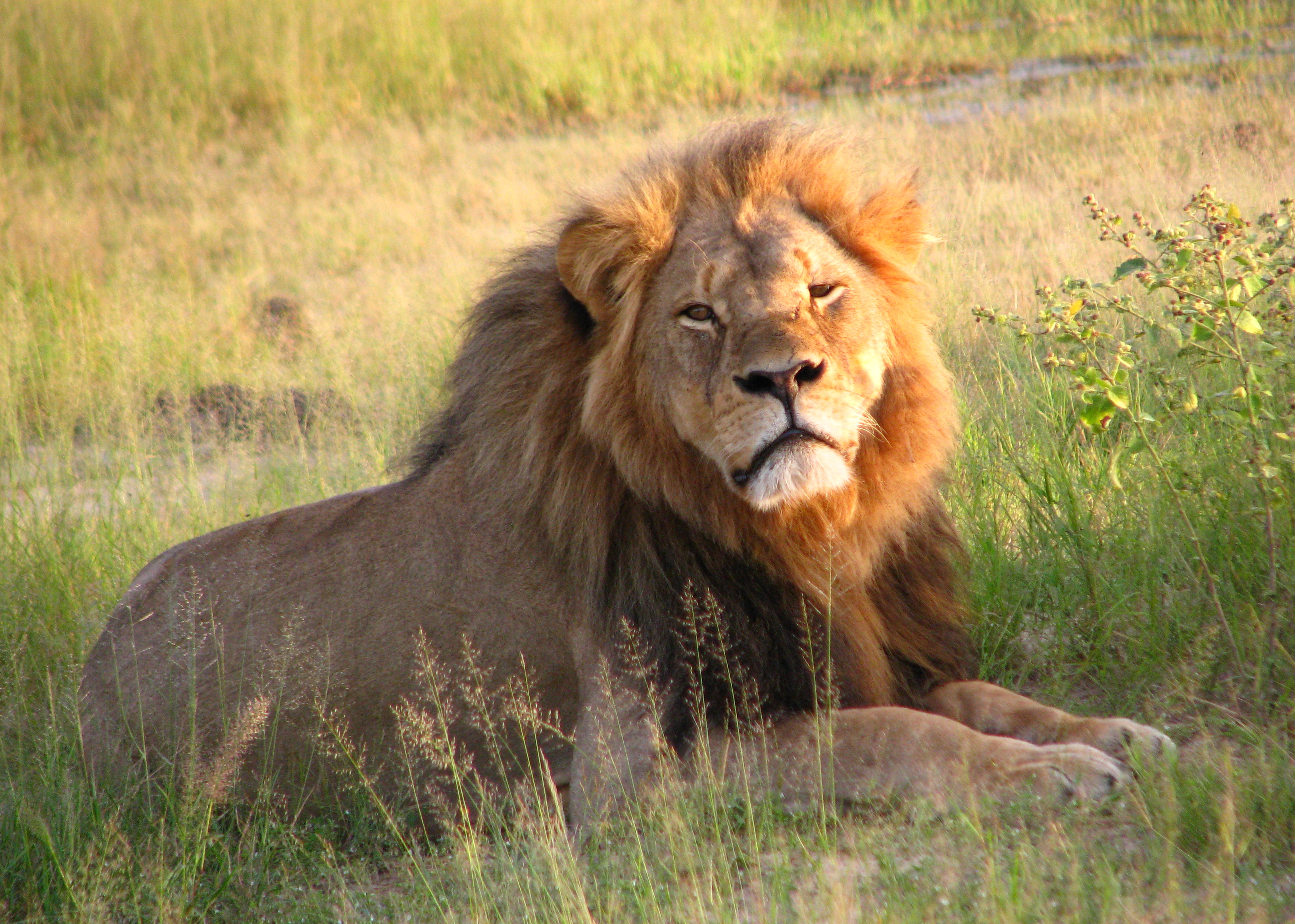 cecil the lion killed by a dentist. Shows the power of PR on small businesses, including financial marketing for IFAs