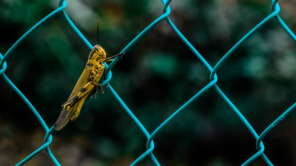 Cricket stuck on a fence - illustrating backlink blunders in marketing for financial advisers